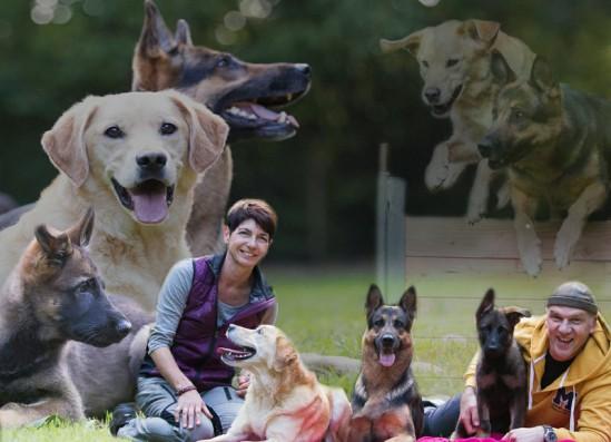 BLIESTAL-HUNDESCHULE Wir bilden zum Therapiebegleithund aus. Weitere Infos über Kontaktformular oder Handy. Die Hundeschule für a l l e Hunde • Welpenspielstunden • Junghundschulung • Begleithundkurse